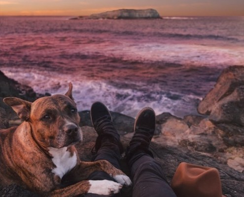 dog and owner looking at the sunset