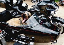 dog sitting in a motocycle sidecar