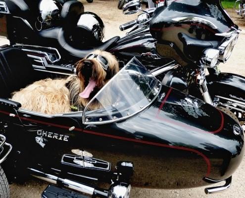 dog sitting in a motocycle sidecar